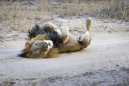 Safari Scenes  30