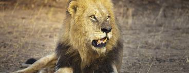 Safari Scenes  31