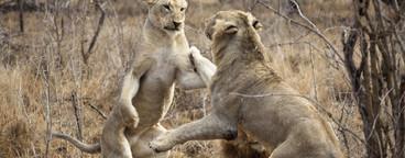 Safari Scenes  32