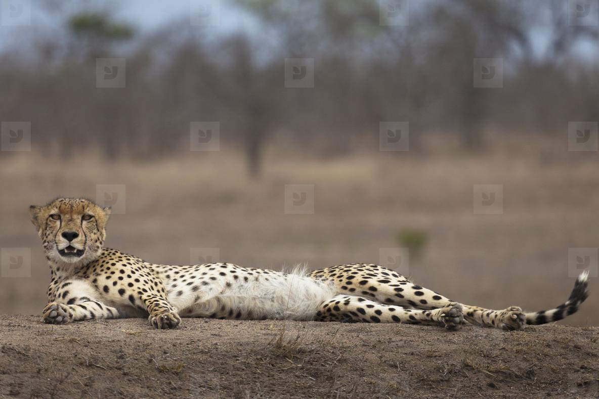 Safari Scenes  33