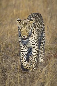 Safari Scenes 35