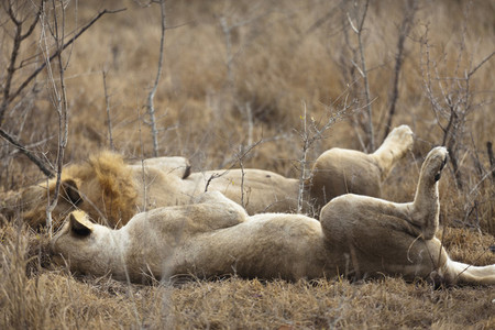 Safari Scenes  36