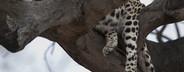 Safari Scenes  37