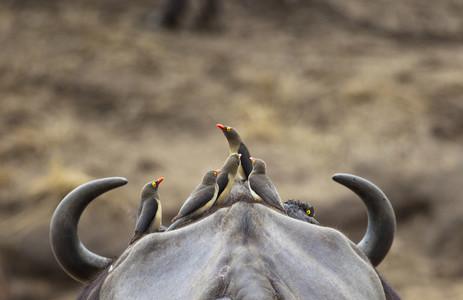 Safari Scenes 38