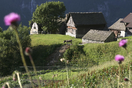Alpine Adventures 13