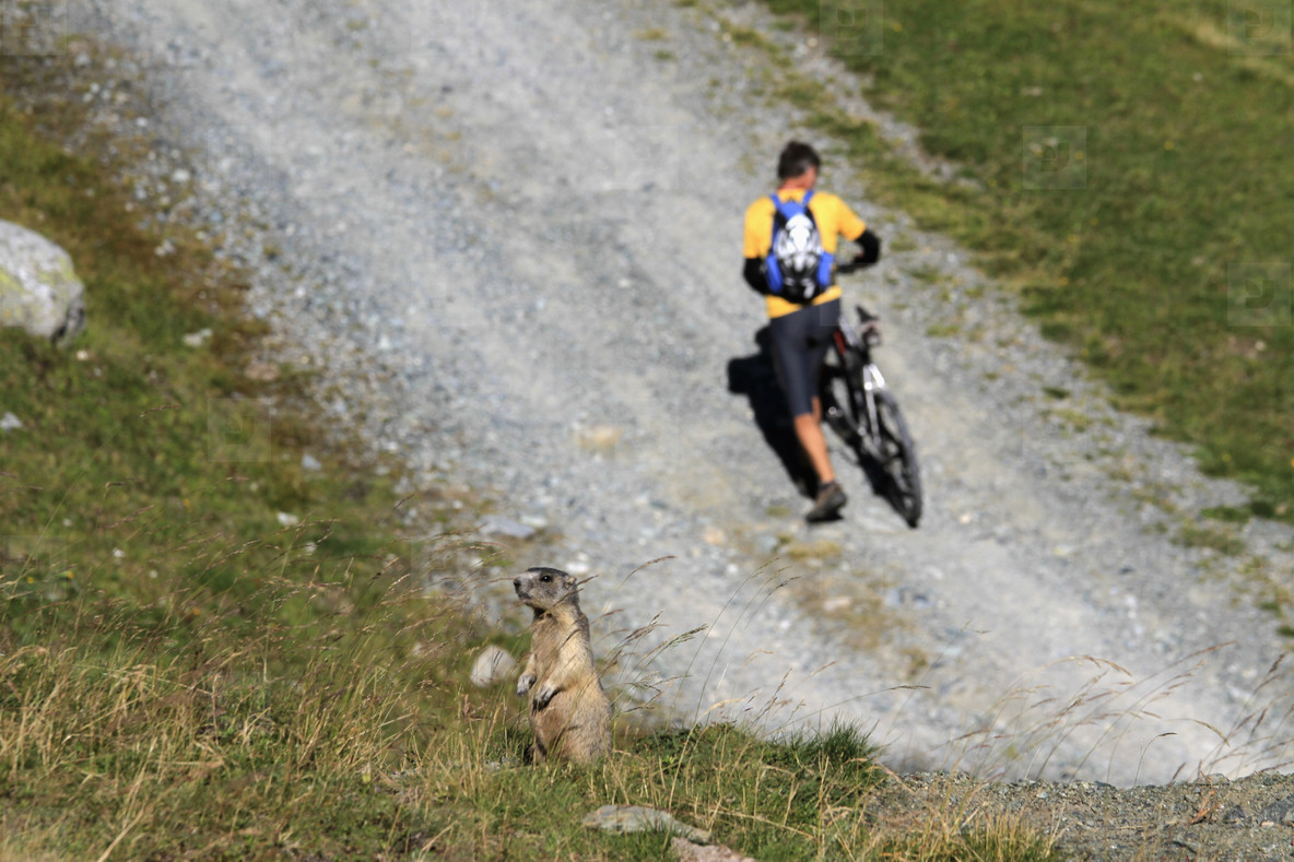 Alpine Adventures  33