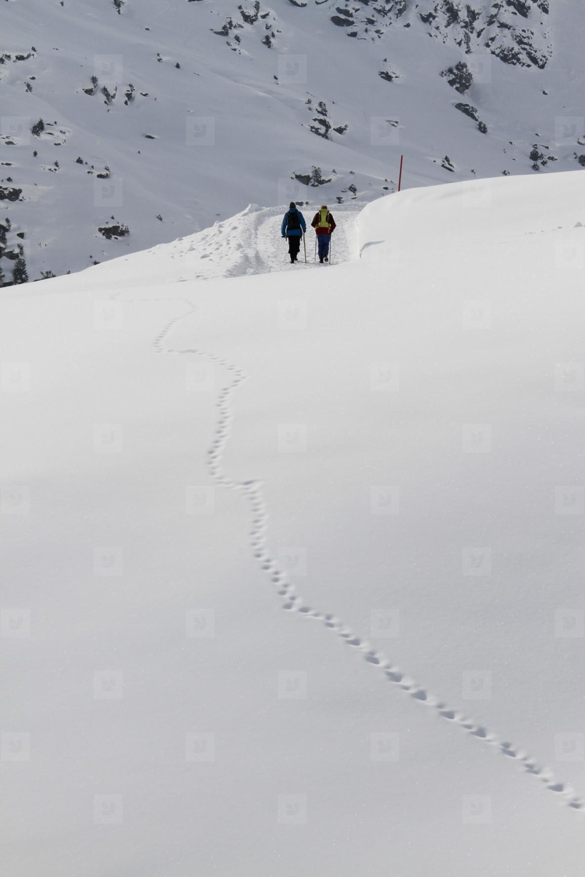 Snowy Mountain Trails  07