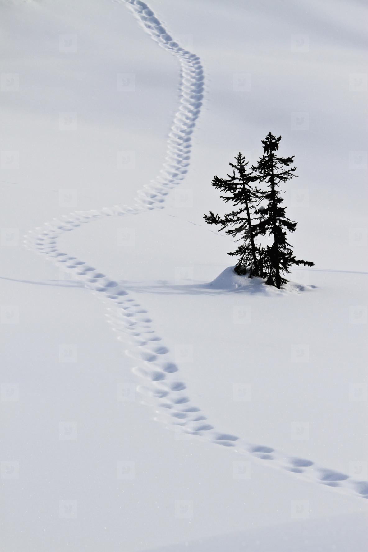 Snowy Mountain Trails  60