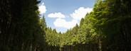 Mountain High  07