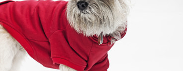 Costumed Dogs  02