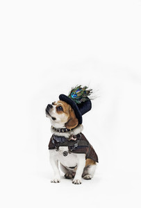 Costumed Dogs 04