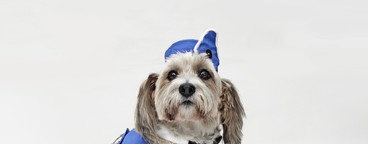 Costumed Dogs  09