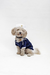 Costumed Dogs  10