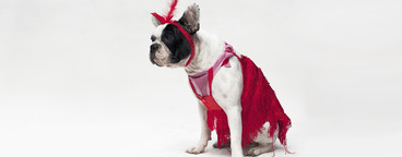 Costumed Dogs  14