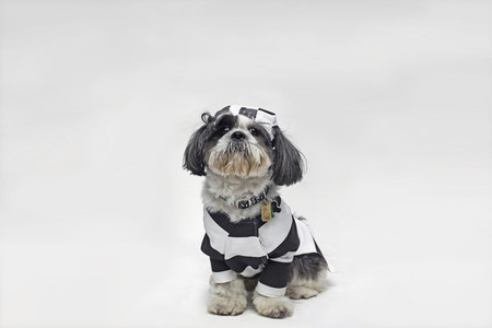 Costumed Dogs 16