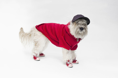 Costumed Dogs 17