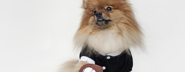 Costumed Dogs  20