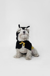 Costumed Dogs  22