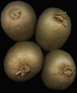 Strange Fruits 02