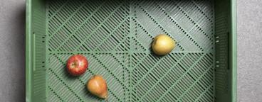 Strange Fruits  04