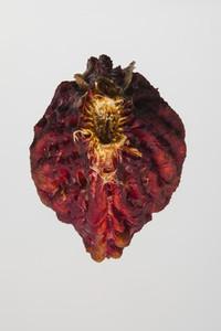Strange Fruits 13