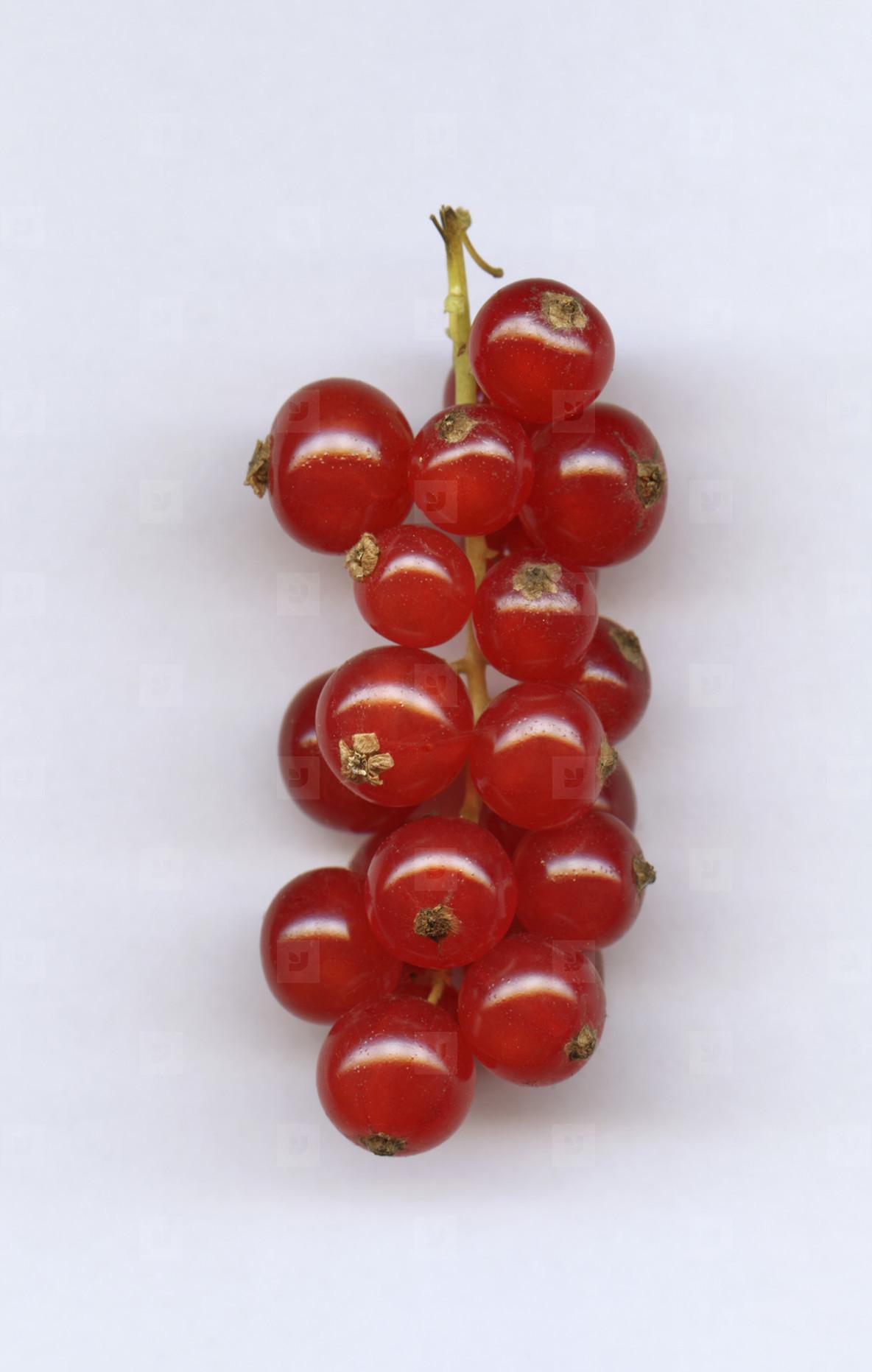 Strange Fruits  22