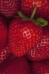 Strange Fruits  27