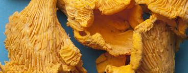 Strange Fruits  33