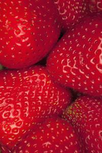 Strange Fruits 37