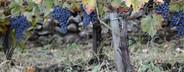 Wine Tasting  09