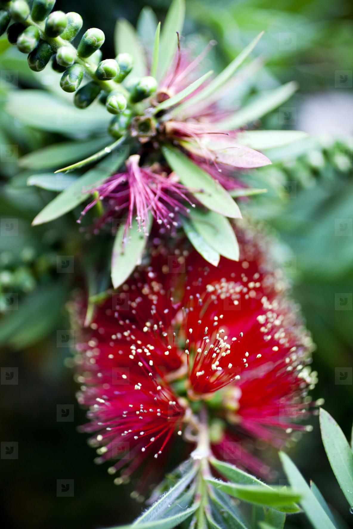 Flower Child  14