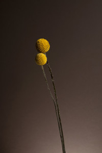 Flower Power 04