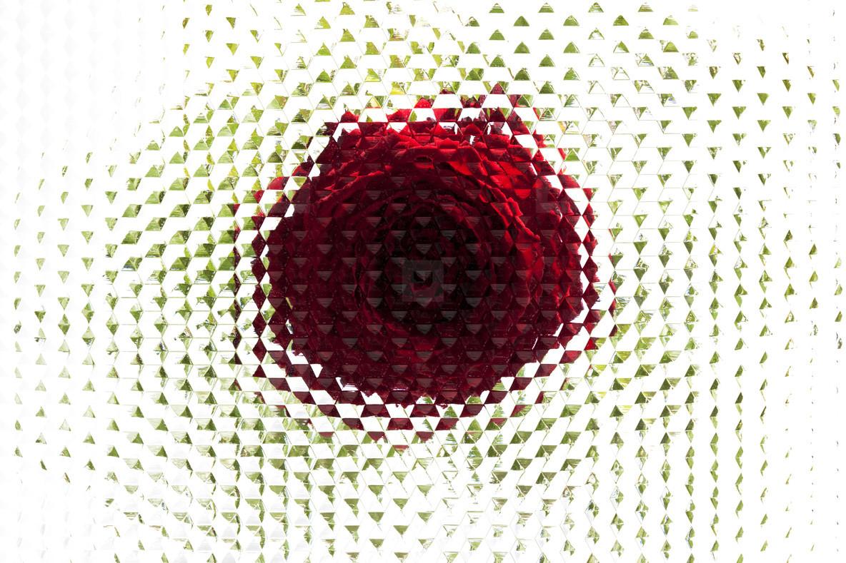 Flower Power  05
