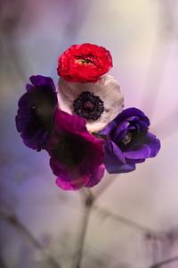 Flower Power 06