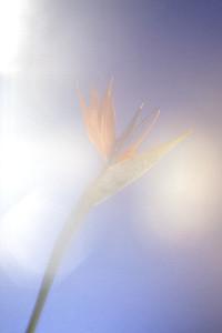 Flower Power 07