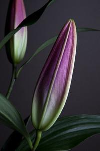 Flower Power 08
