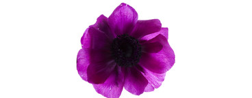 Flower Power  19