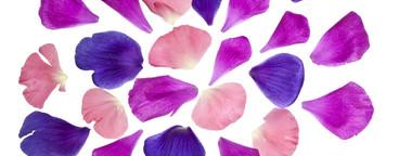 Flower Power  28