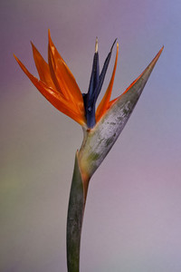 Flower Power 29