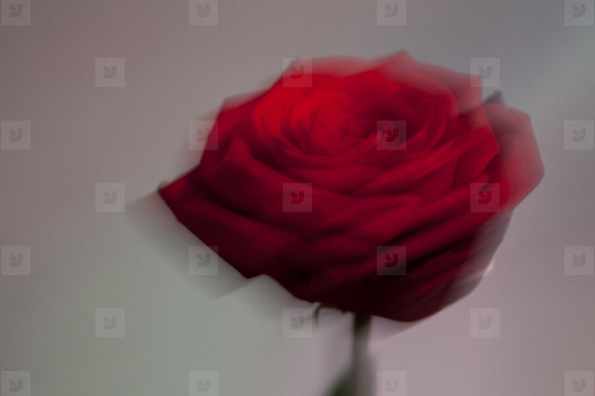 Flower Power  31
