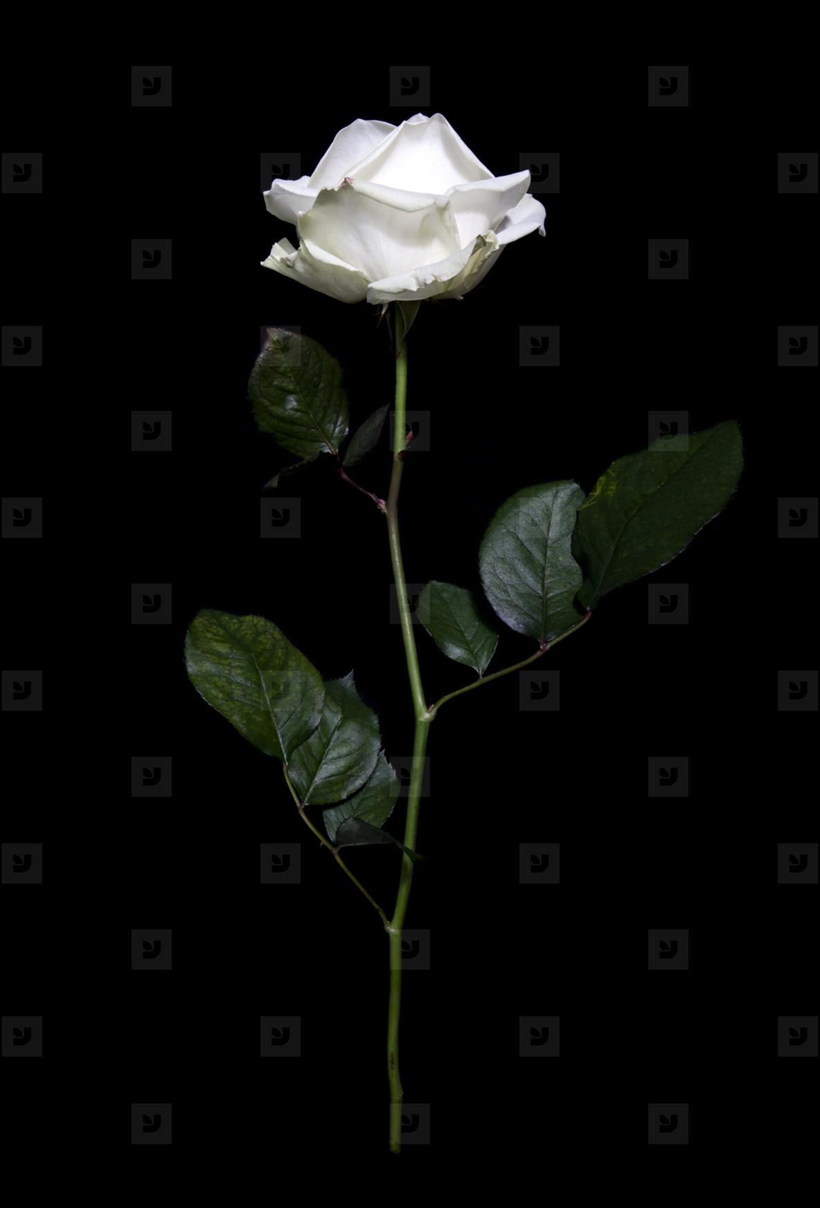 Flower Power  32