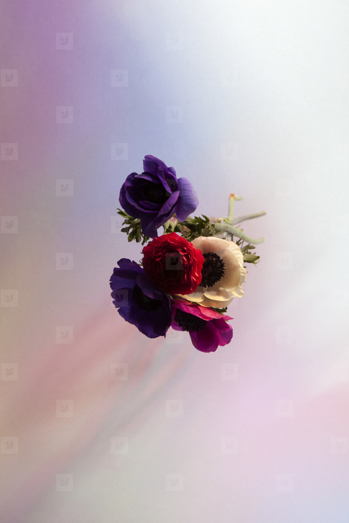 Flower Power  33