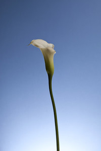 Flower Power 34