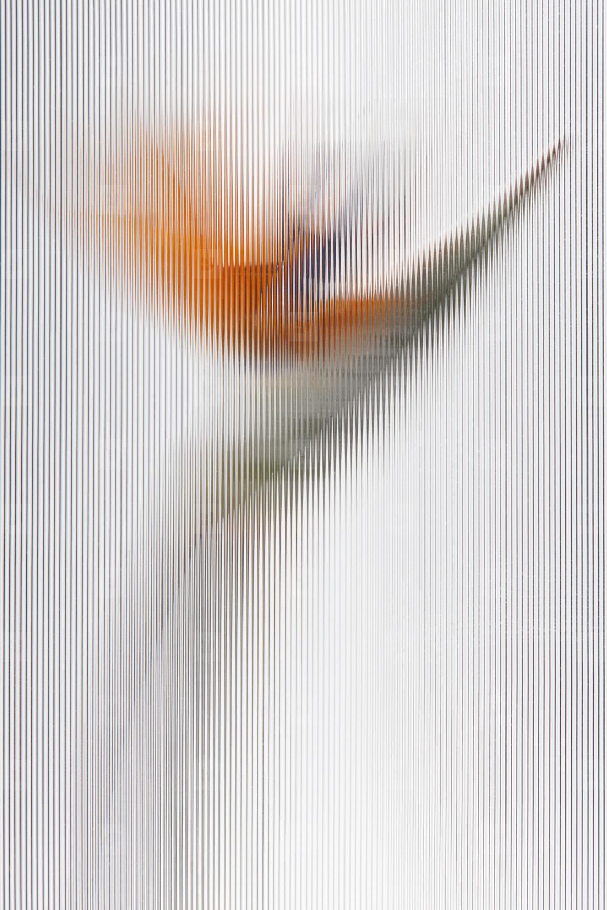 Flower Power  36