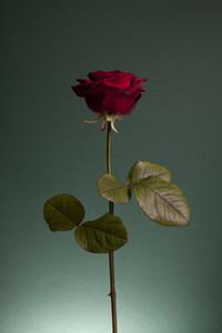 Flower Power 41