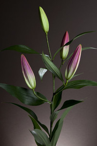 Flower Power 43