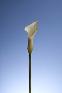 Flower Power 46