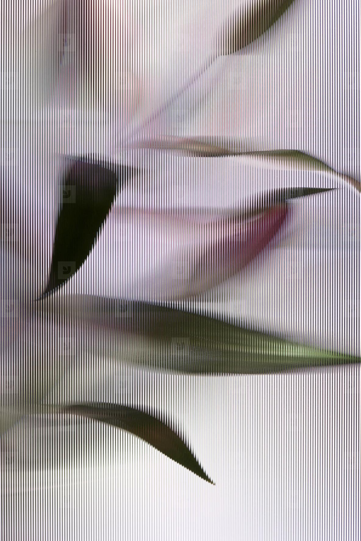 Flower Power  49