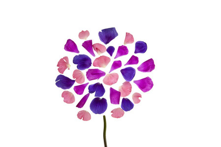 Flower Power 50