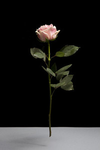 Flower Power 51